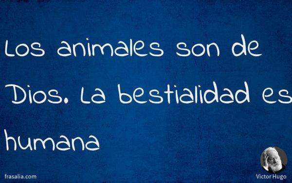 Los animales son de Dios. La bestialidad es humana